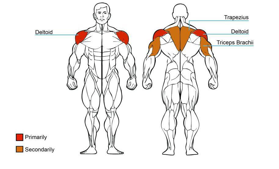 shoulder press commercial fitness equipment